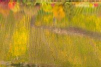 Herbstspiegel, Mosel